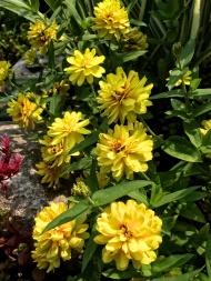 Garden Flowers-24