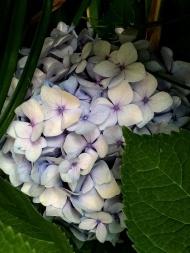 Garden Flowers-34